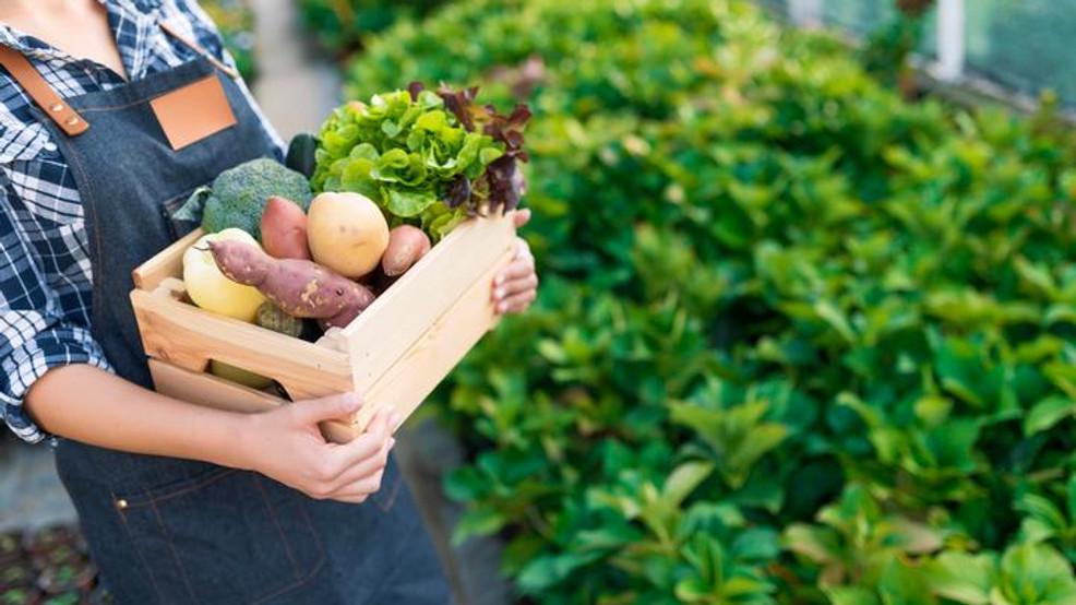 5 principaux avantages de manger et d'utiliser des produits Bio