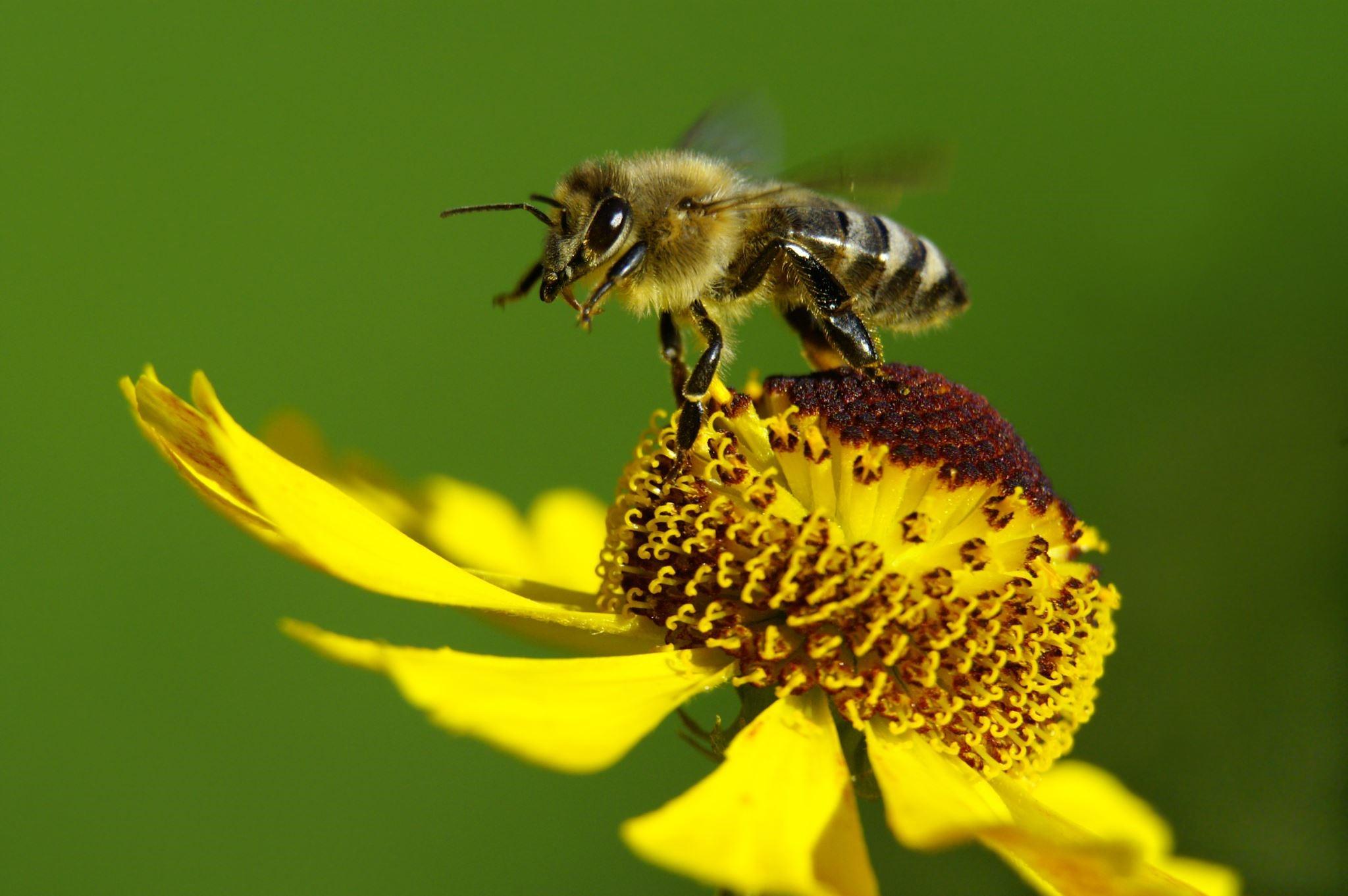 Nourrir correctement les abeilles : quand et comment?
