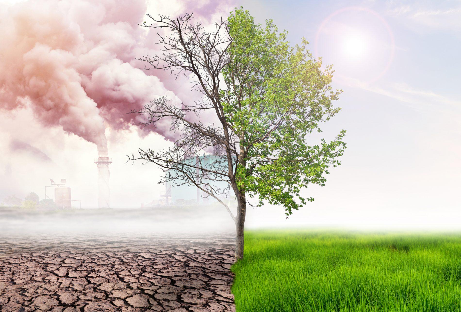 4 effets néfastes de la pollution environnementale sur la nature