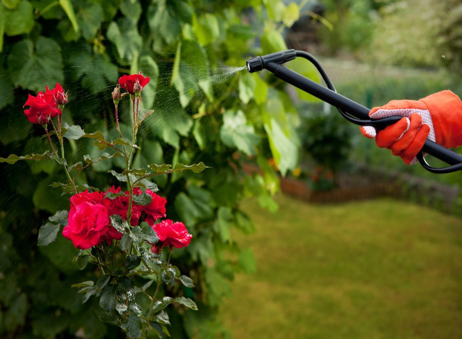 Les 5 pires insectes qui font des ravages dans notre jardin